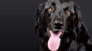sonhar com cachorro preto