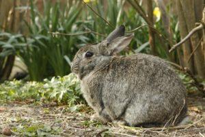 sonhar com coelho