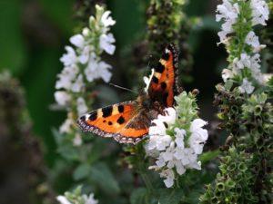 sonhar com borboleta