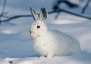 sonhar com coelho branco