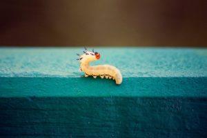 sonhar com vermes