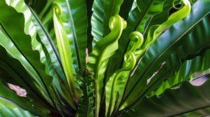 sonhar com plantas