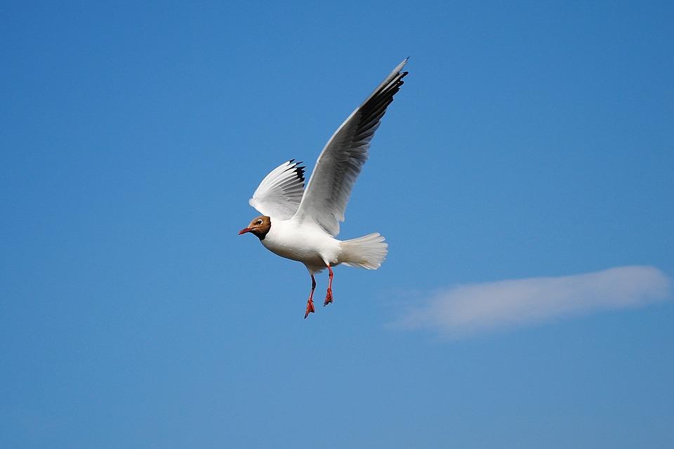 Sonhar com pássaros