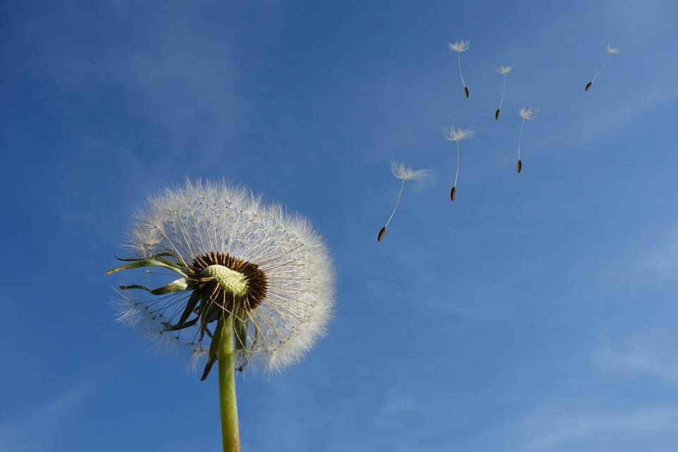 Sonhar com vento