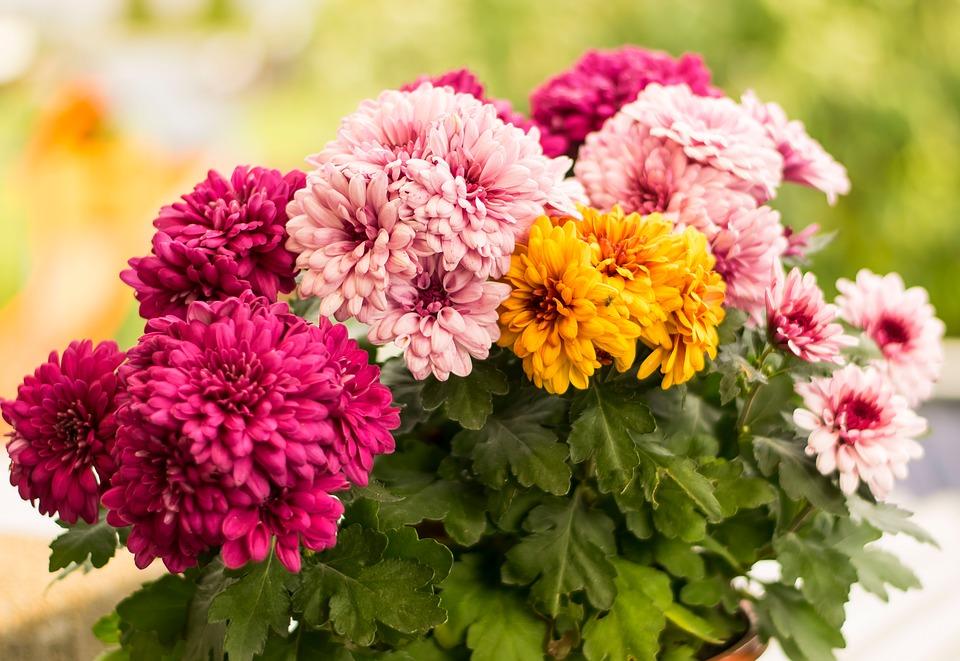 Sonhar com flores coloridas