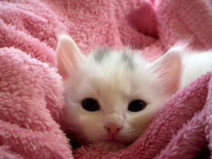 Sonhar com filhote de gato