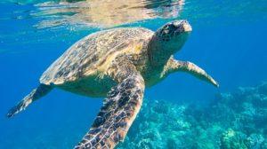 Sonhar com tartaruga grande