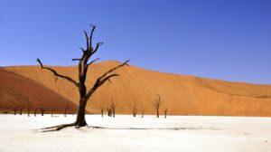 Sonhar com árvore seca