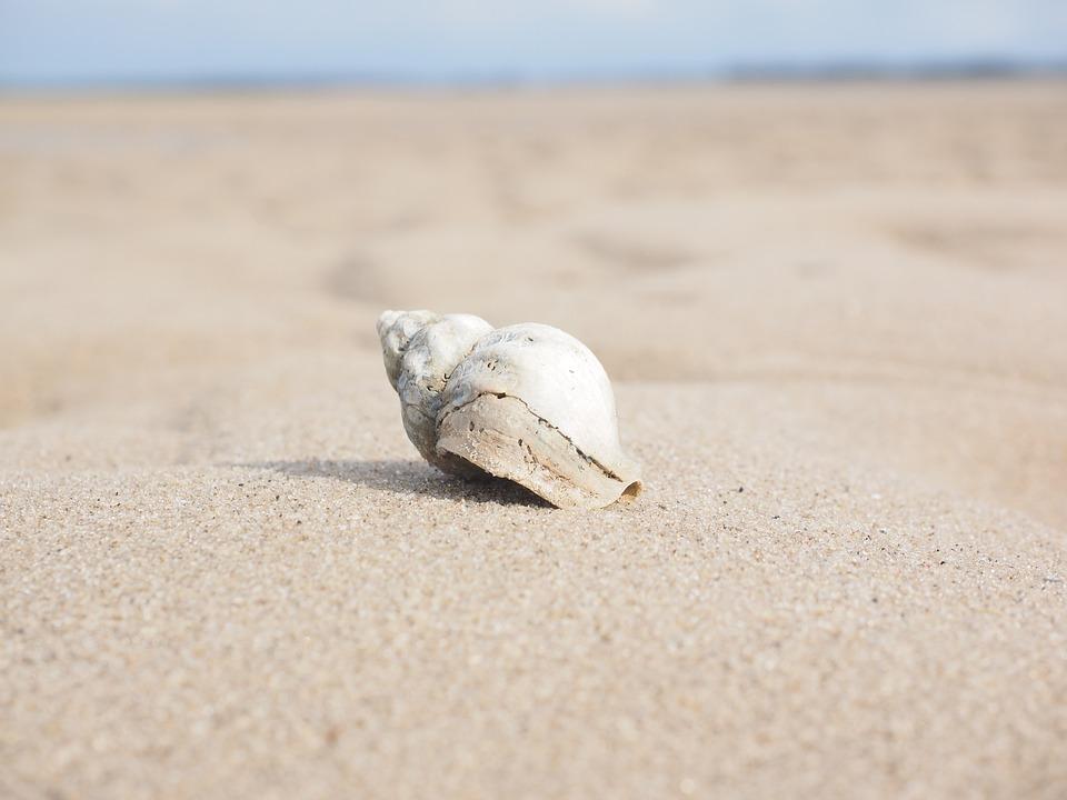 Sonhar com concha do mar