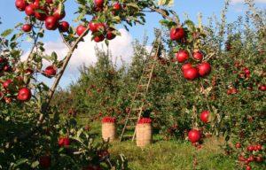 Sonhar com pomar