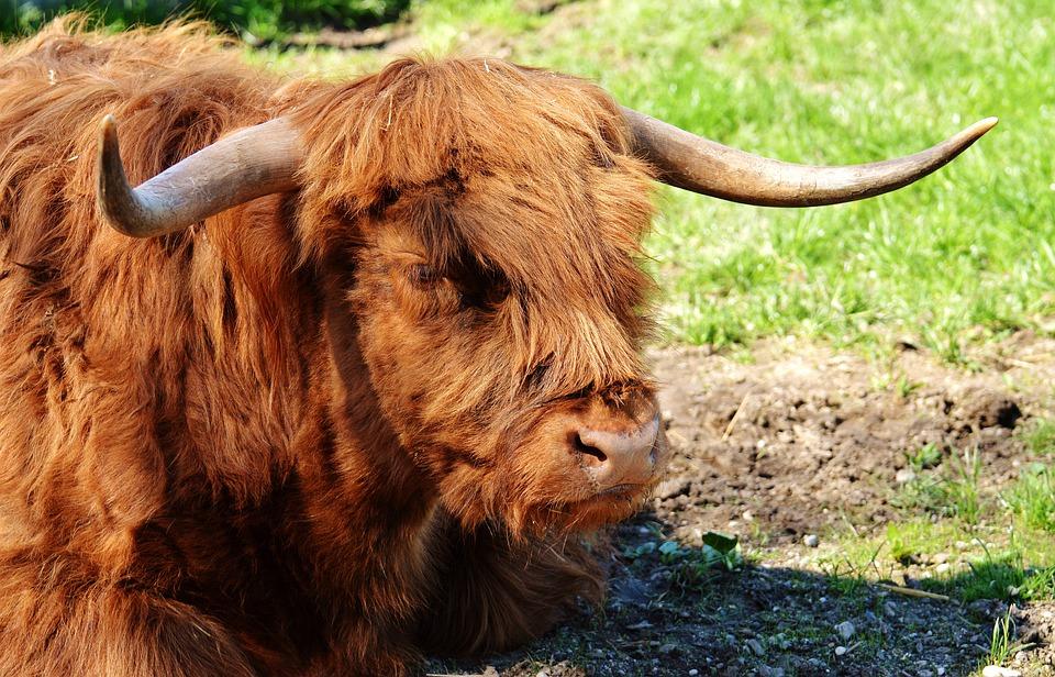 Sonhar com touro correndo atrás de mim