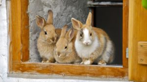 Sonhar com coelhos