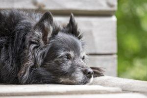 Sonhar com cachorro morrendo
