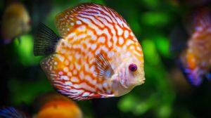 Sonhar com peixe vivo