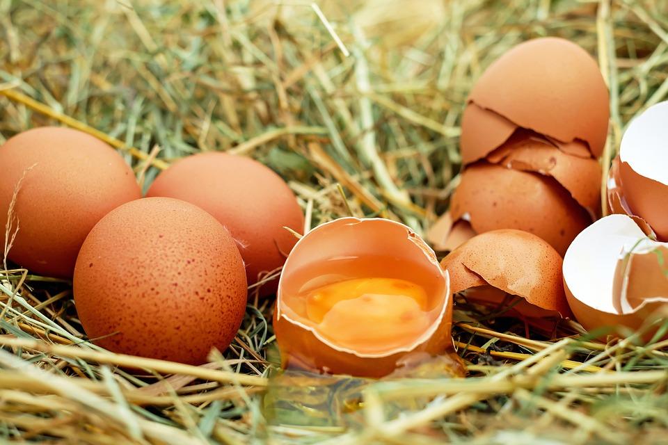 Sonhar com casca de ovo