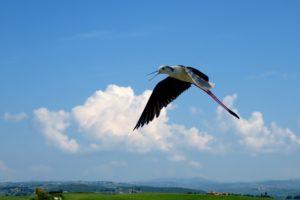 Sonhar com pássaro voando