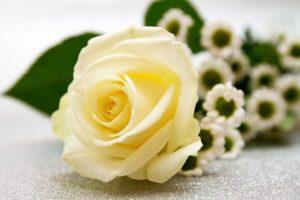 Sonhar com rosa branca